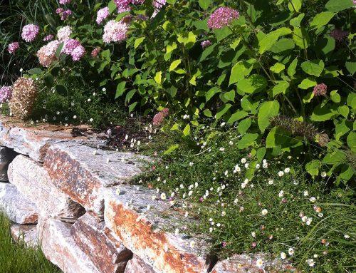 Gartenneuanlage mit Natursteinmauer und Pool