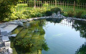 Schwimmteich in innenhofgarten eichhorn for Gartengestaltung 1230 wien