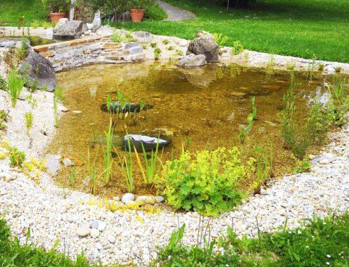 Generalsanierung Biotop mit Wasserfall